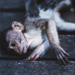 Indonezja: Hejt na Bali