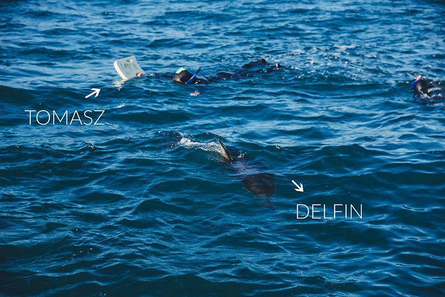 nurkowanie z delfinami kaikoura