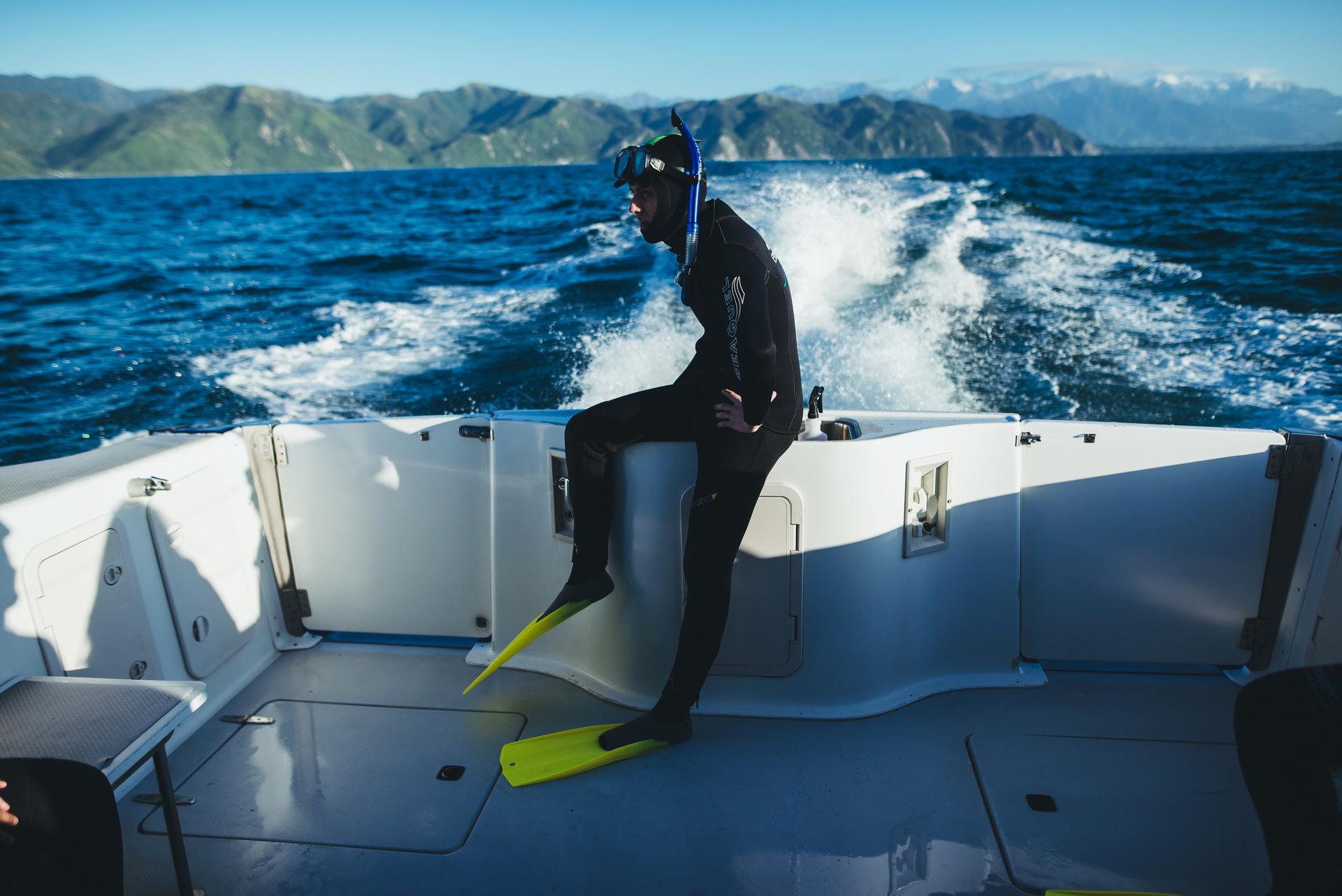 dolphin encounter kaikoura nowa zelandia