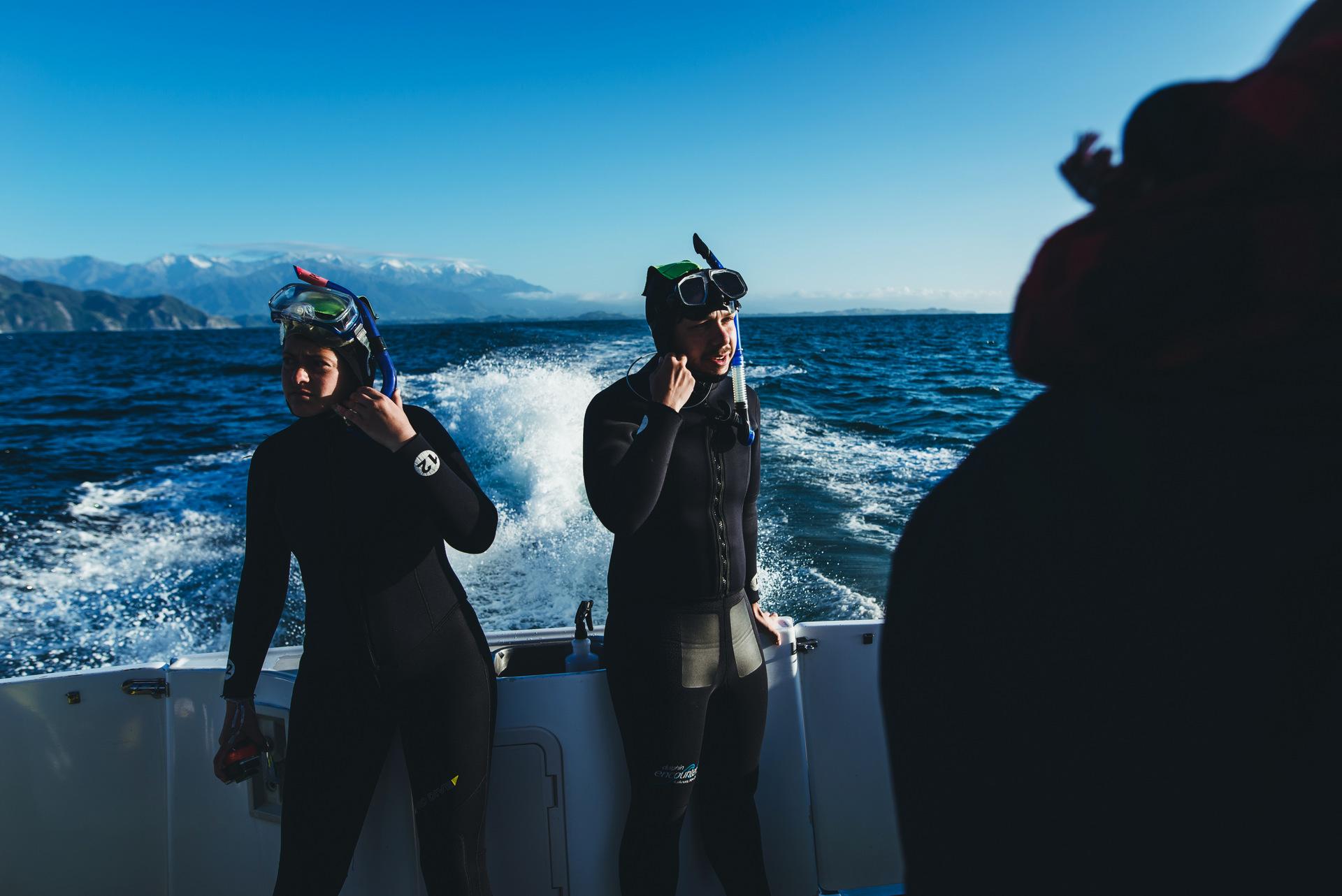 delfiny nowa zelandia