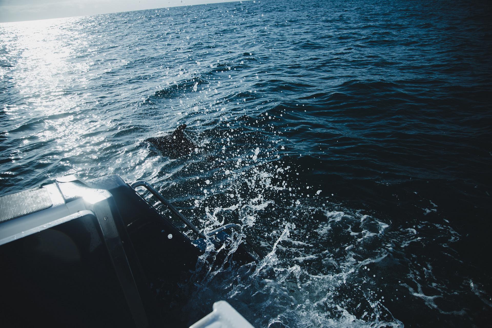 pływanie z delfinami nowa zelandia