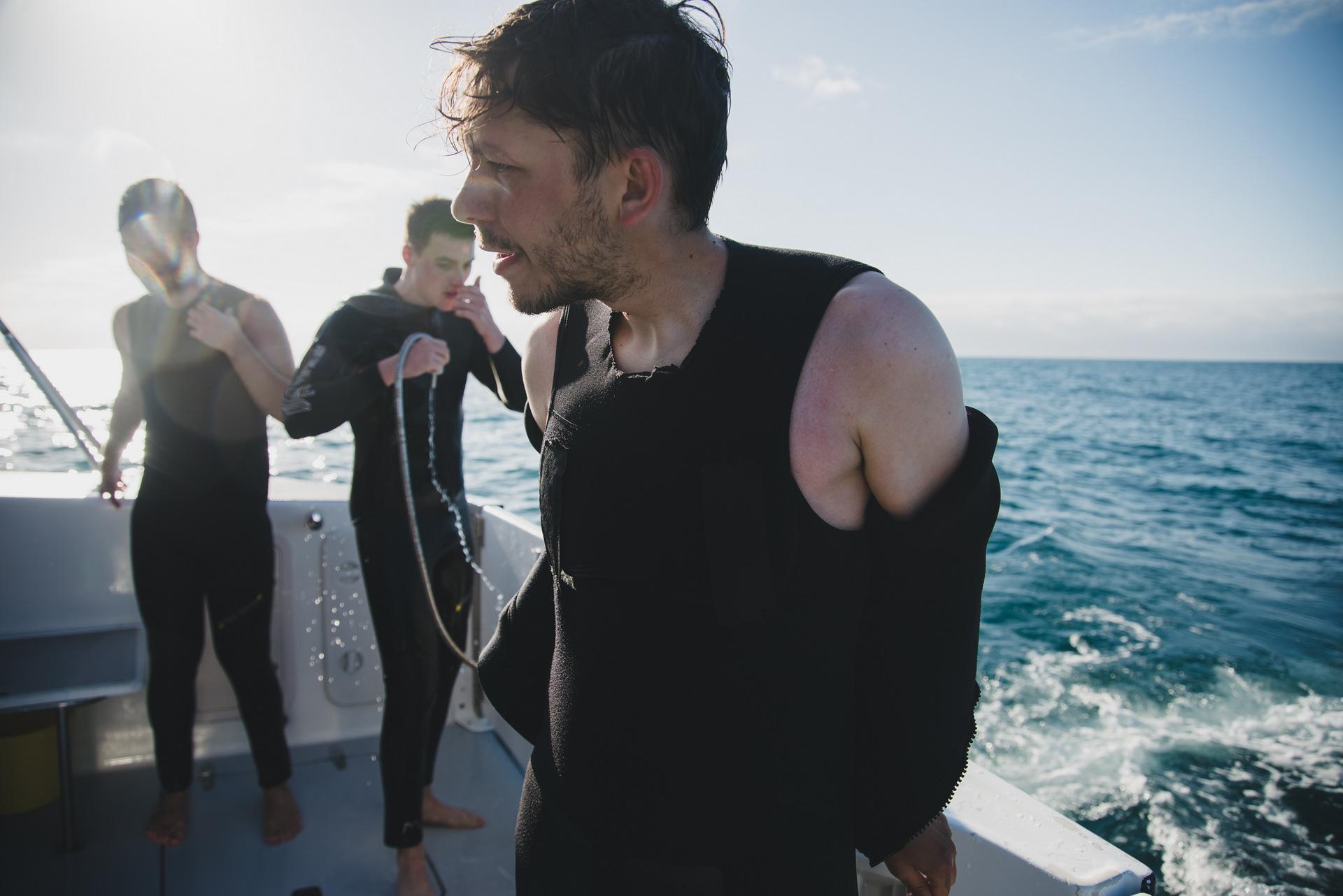 pływanie z delfinami nowa zelandia kaikoura