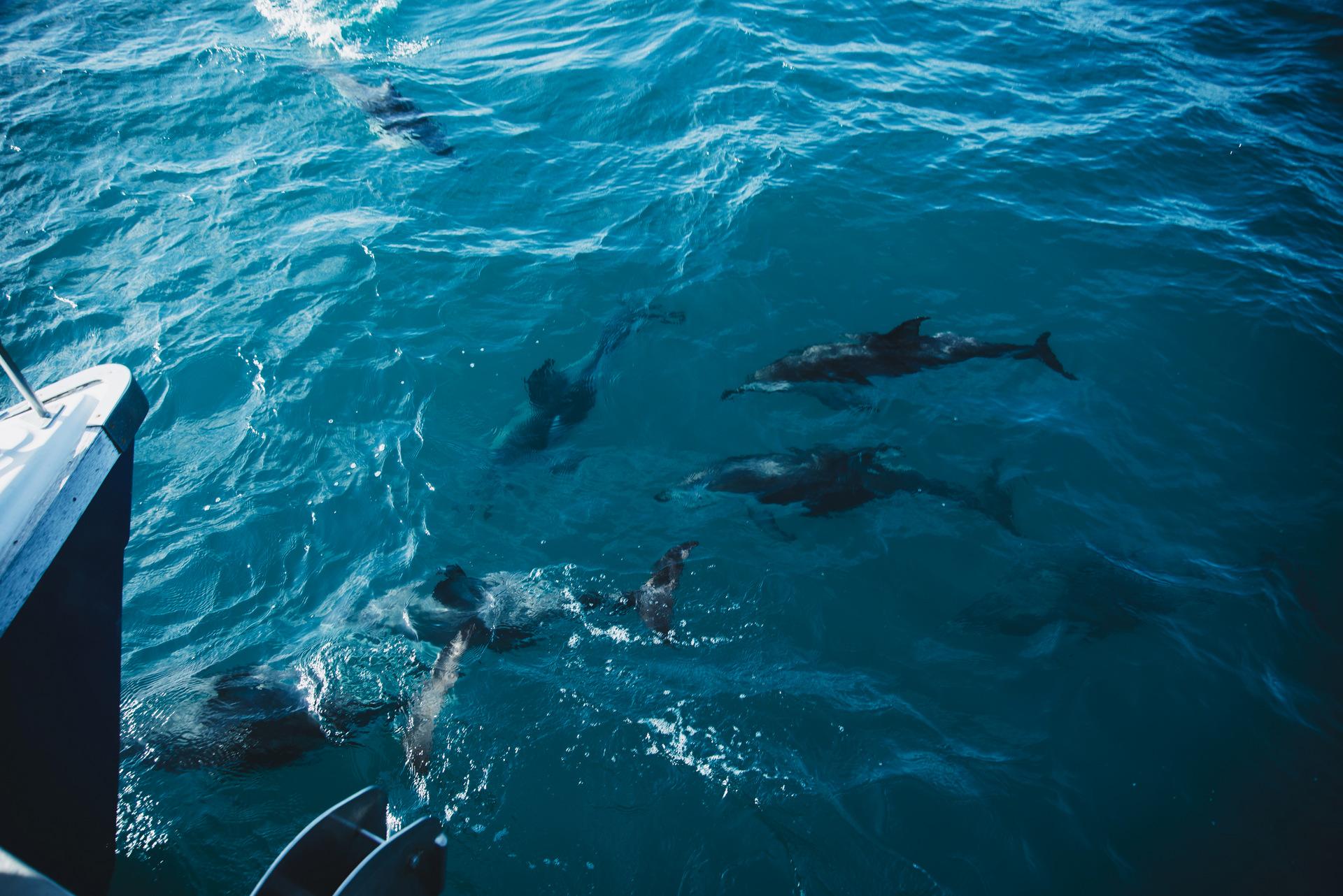 delfiny kaikoura nowa zelandia