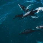 Nowa Zelandia: pływający z delfinami