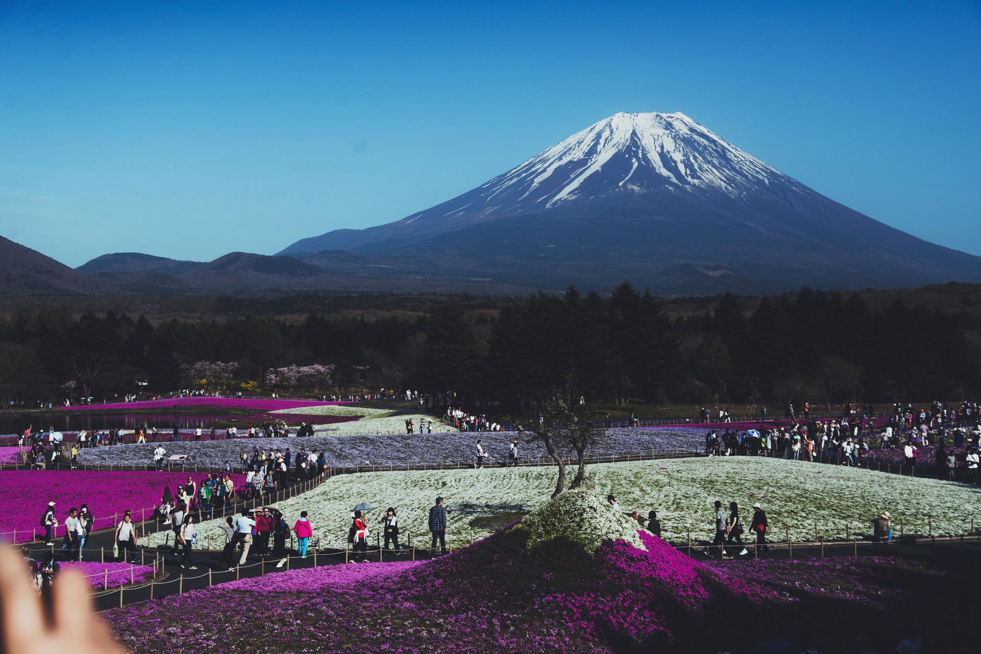kwiaty po gora fuji