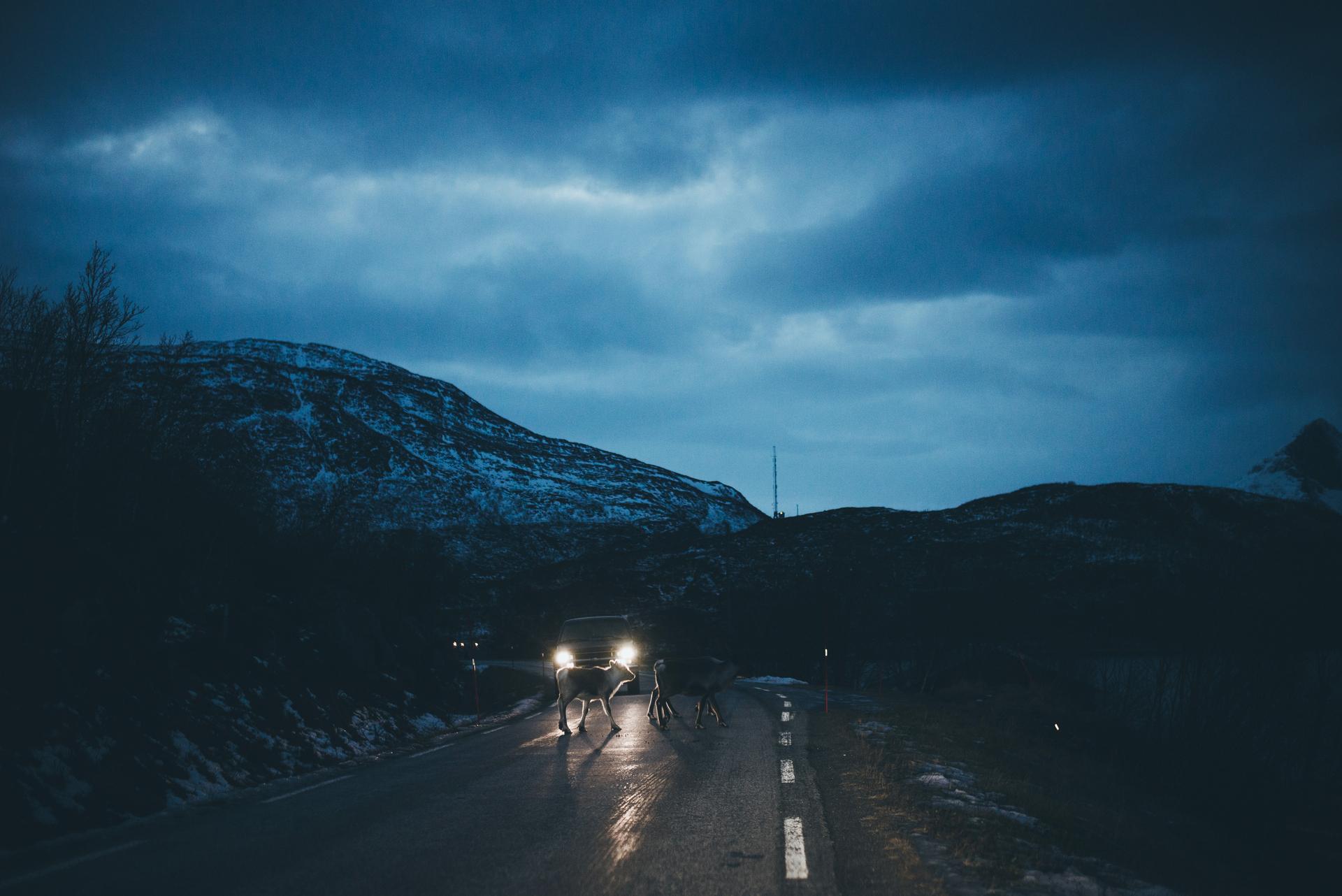 renifery na drodze