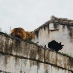 Granada, Tiki Taki i Kasztanki: dlaczego Granada jest lepsza od Sewilli?