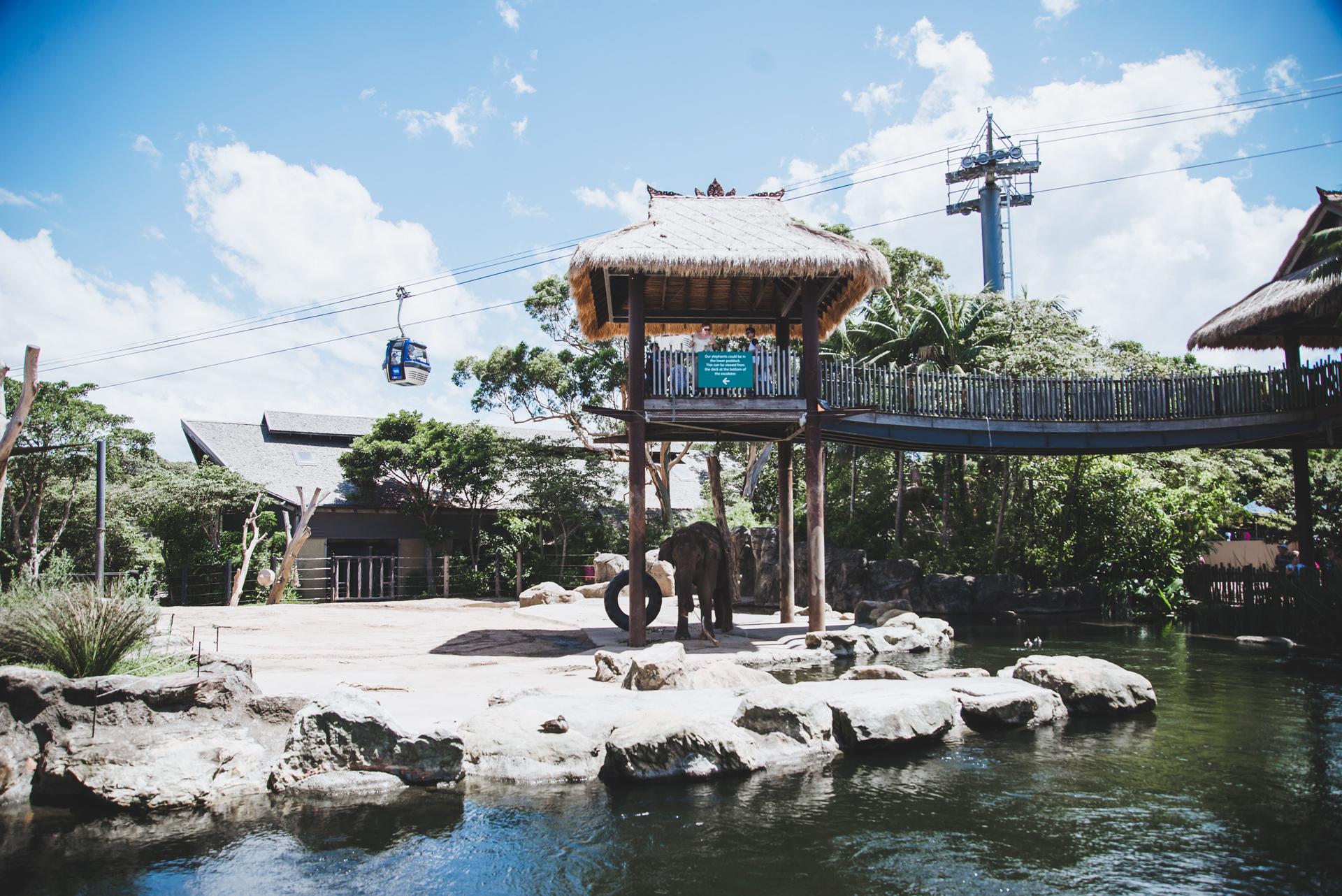 sydney zoo kolejka linowa